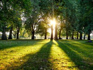 Hyde Park Sunlight through trees